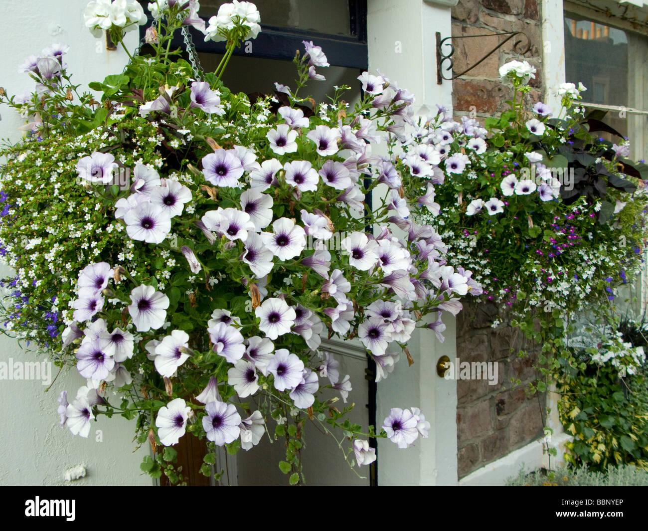 Hanging Basket Outside Front Door Petunias