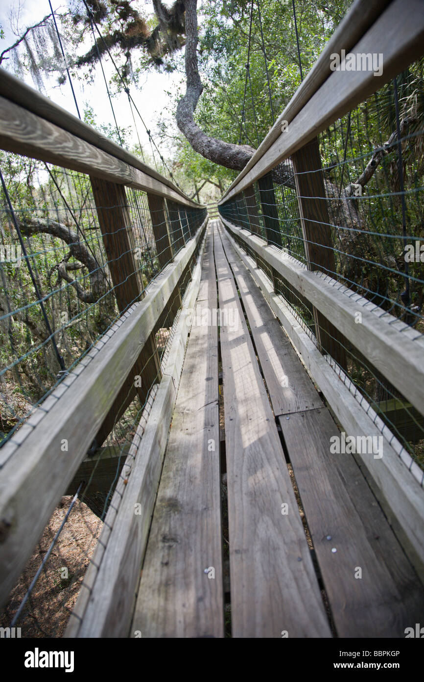 A canopy walkway leads to a viewing tower at Myakka River State Park in Florida & A canopy walkway leads to a viewing tower at Myakka River State ...