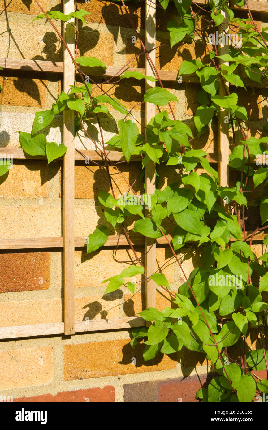 Climbing Trellis. Diy Trellis Make A Trellis Out Of Wire A ...