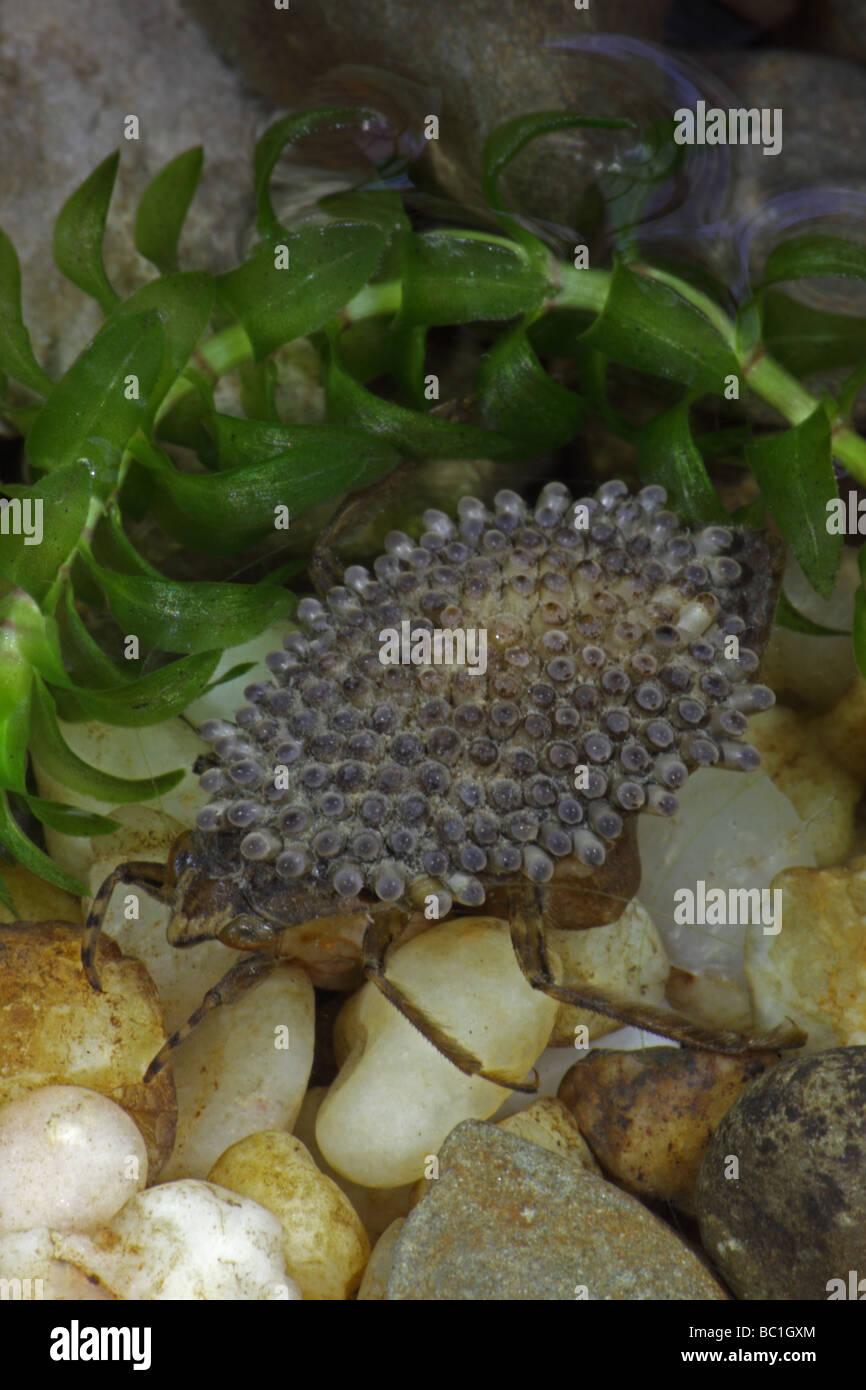 Urban Entomology Ebeling Chap 4 Classes of Arthropod