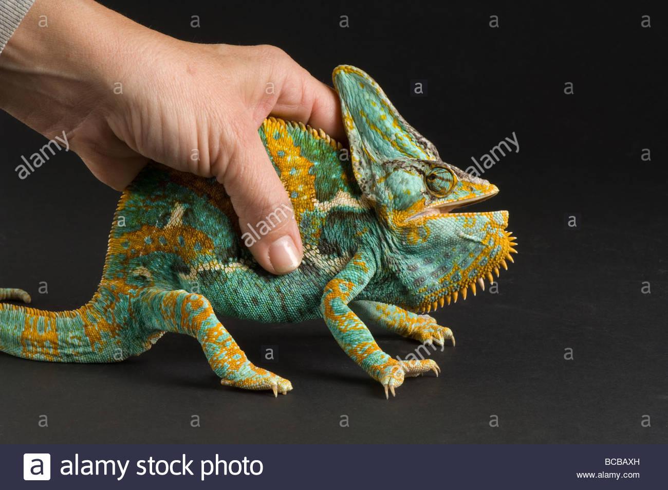 Chameleons, The - Live In Toronto