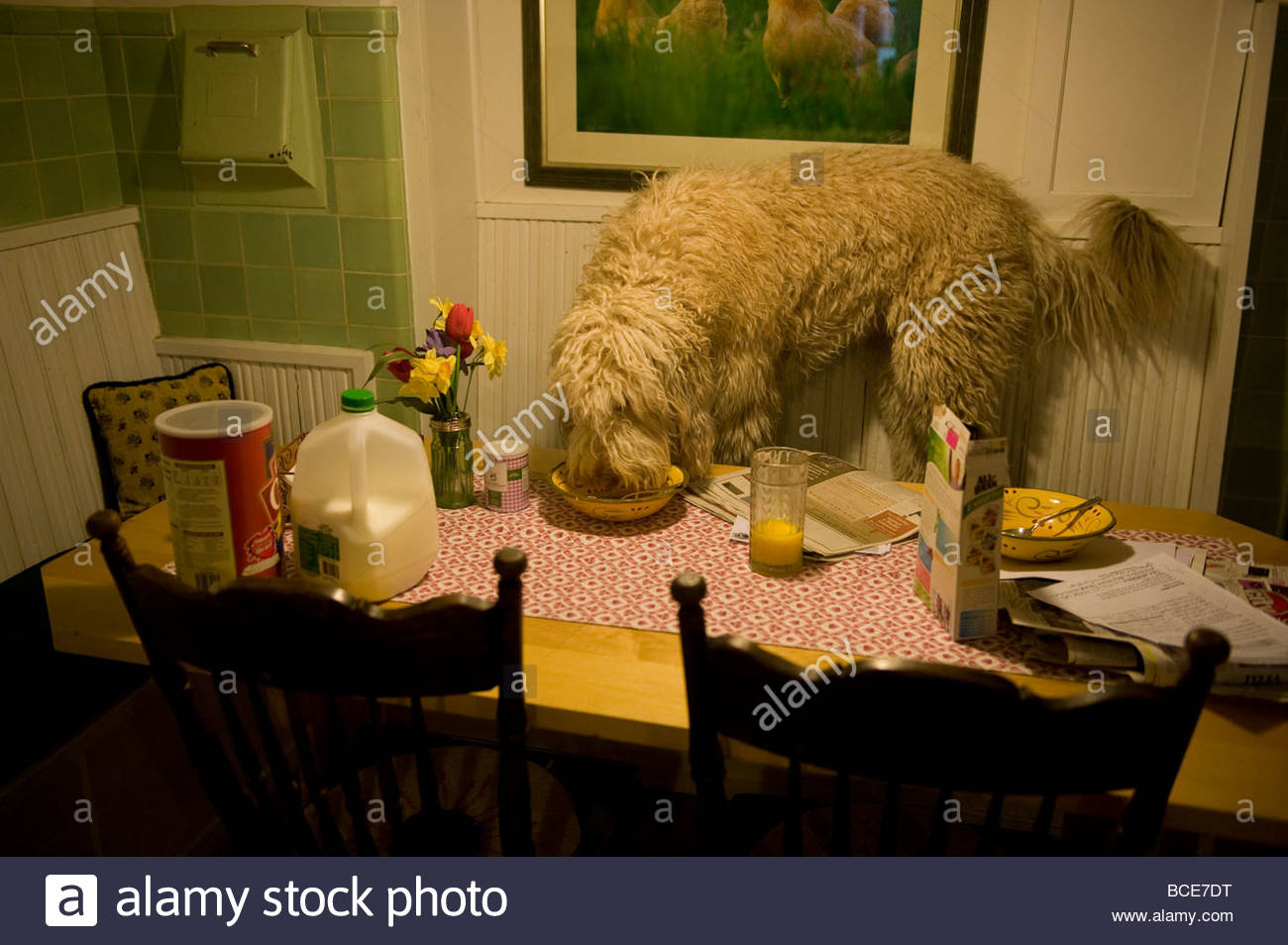 Kitchen Table With Food dog table eat stock photos & dog table eat stock images - alamy