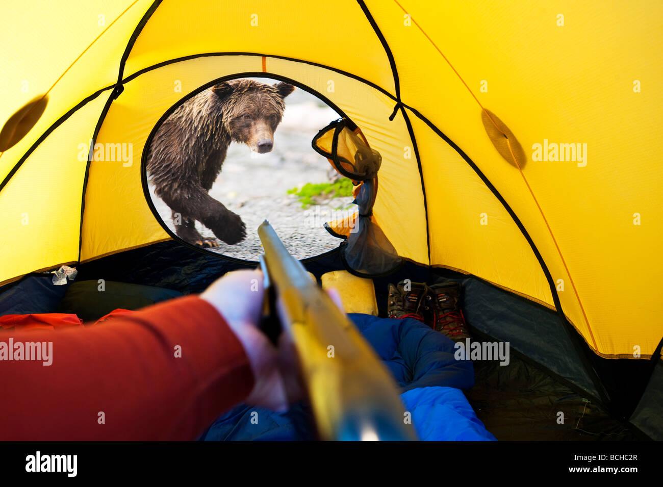 COMPOSITE Grizzly bear looking through tent door with man inside Alaska COMPOSITE & COMPOSITE Grizzly bear looking through tent door with man inside ...