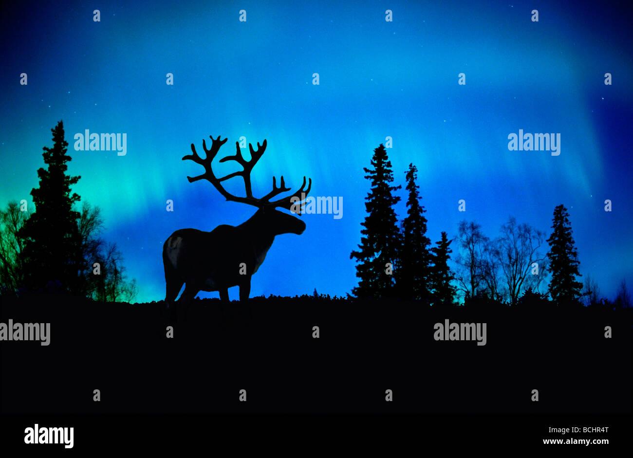 animal live wallpaper
