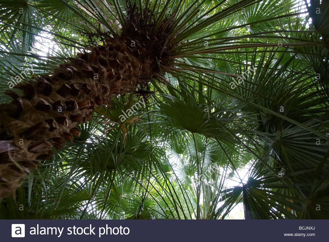 Palm trees jardin botanico puerto de la cruz for Jardin botanico de tenerife
