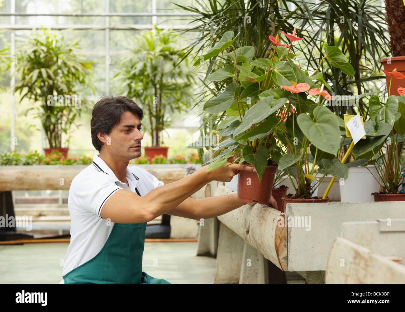 s clerk in flower shop side view stock photo royalty stock photo s clerk in flower shop side view