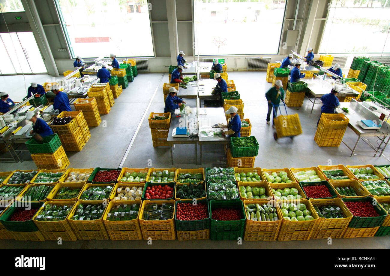 Workers Packaging Fresh Produce In The Factory Floor Beijing China