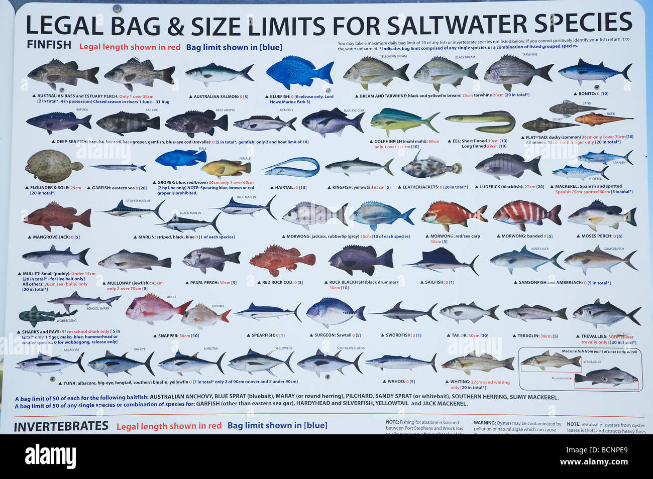 Saltwater fish chart nsw legal bag and size limits for for Fish size limits