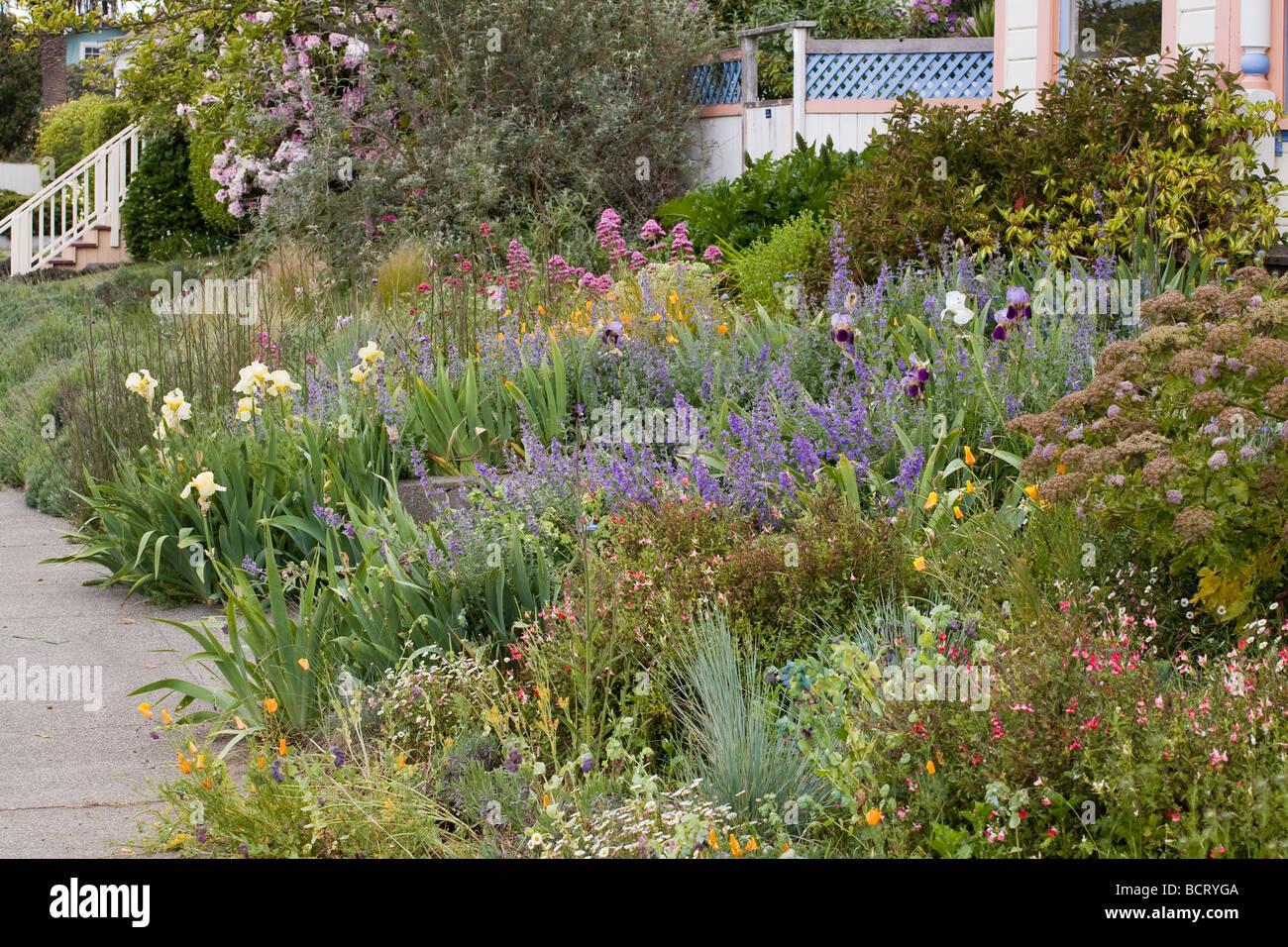 Great Amy Stewart S Front Yard Flowery No Lawn Cottage Garden In Eureka California