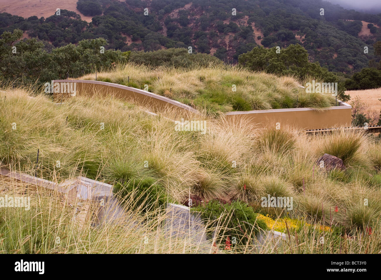 Grass meadow green roof garden for California home with fescue veldt grass and brome : roof meadow - memphite.com