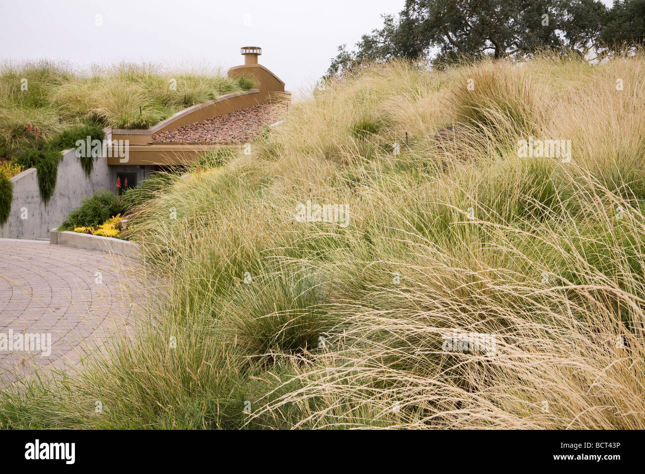 Grass meadow green roof garden with Atlas Fescue Festuca mairei and Pennisetum spatiolatum veldt grass as groundcovers : roof meadow - memphite.com