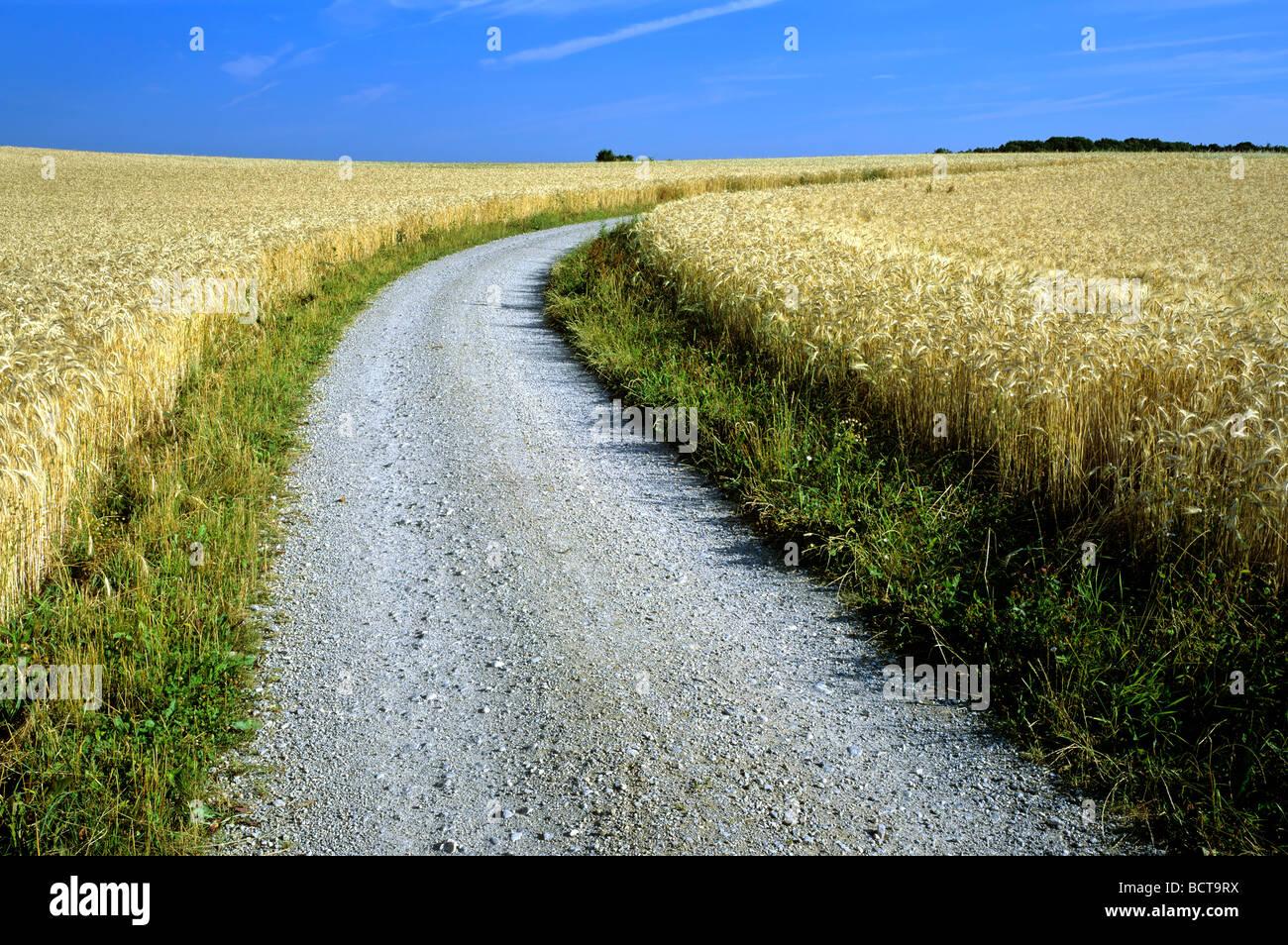 Crop sprites Dirt-road-gravel-road-between-fields-of-grain-barley-field-upper-bavaria-BCT9RX
