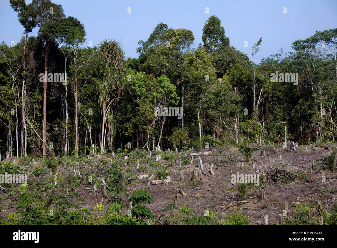 indonesia deforestation Indonesia forest information and data environment - current issues: deforestation water pollution from industrial wastes, sewage air pollution in.