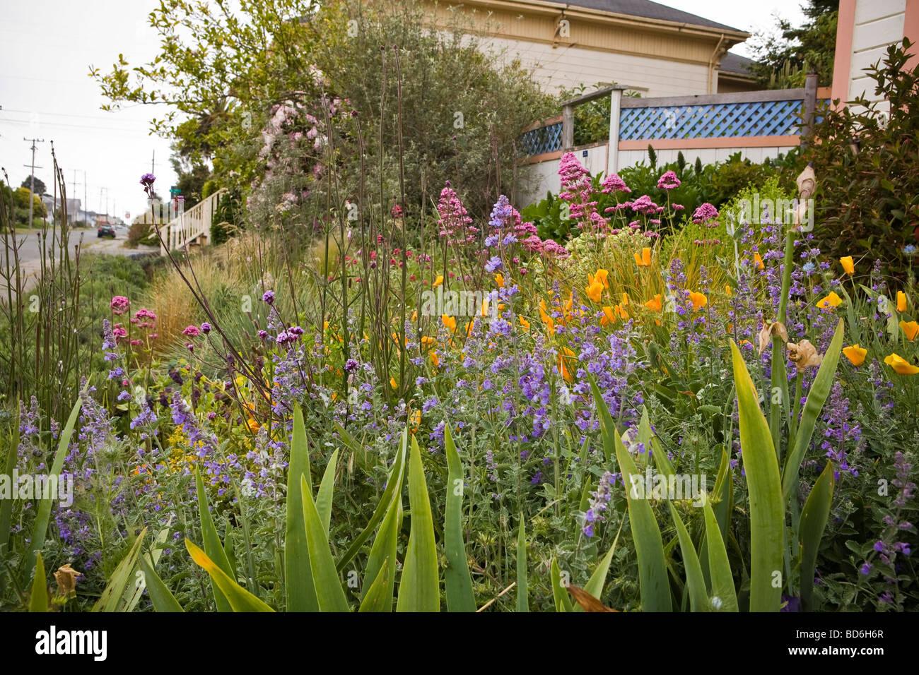 Amy Stewart S Front Yard Cottage Garden Flowery No Lawn Cottage Garden By  The Street In Eureka California