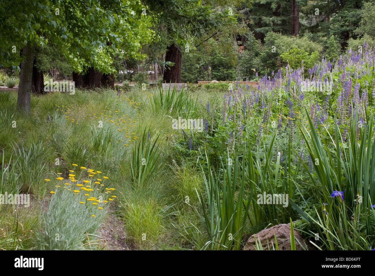 Meadow Garden With Swale As Rain Garden John Greenlee
