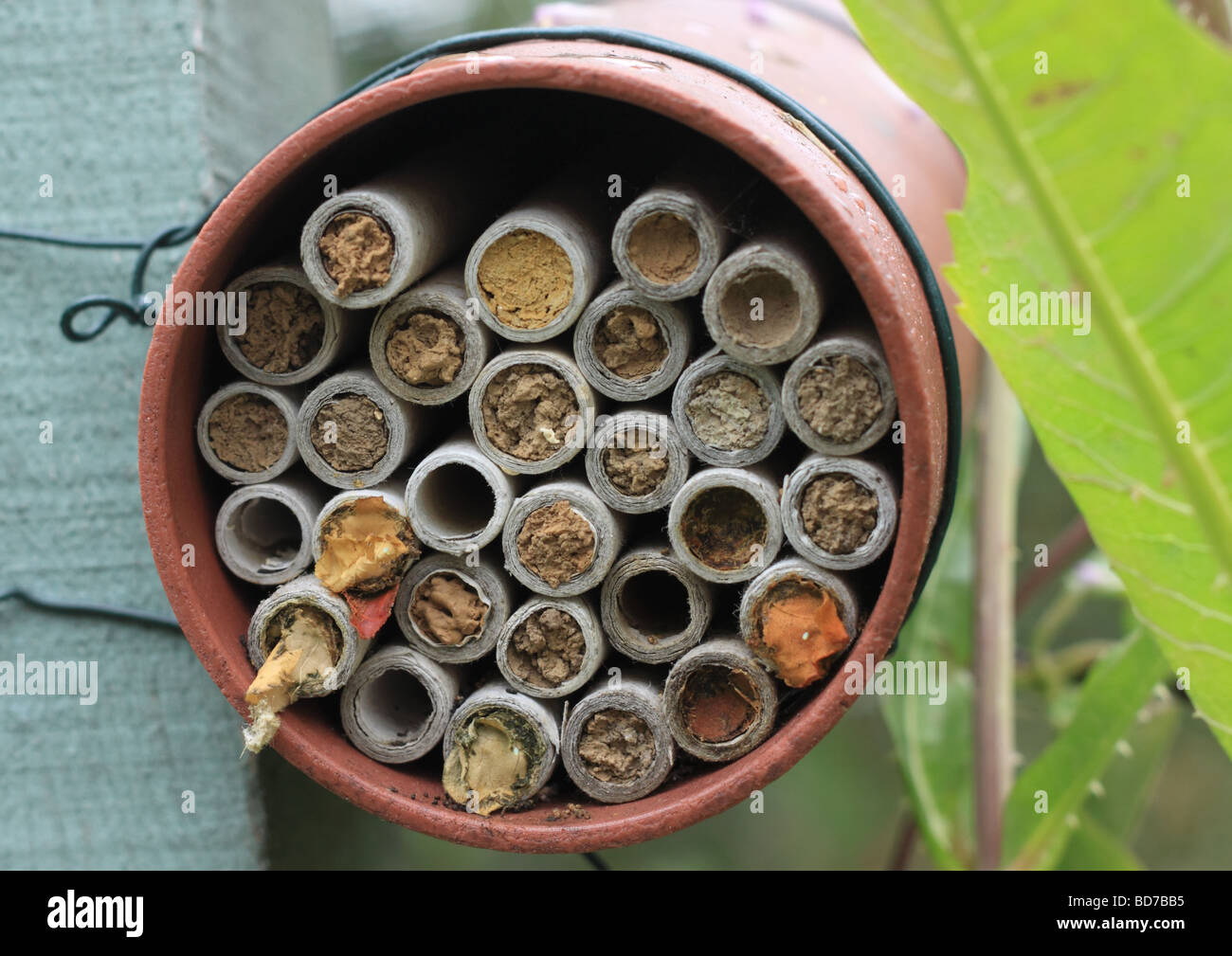 Mason Bee And Leaf Cutter Nest