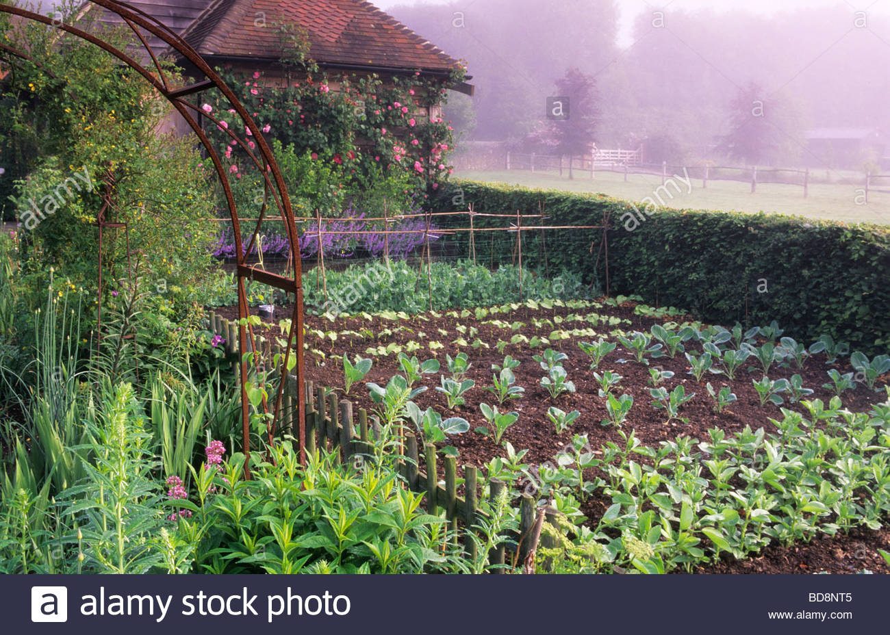 Private Garden Surrey Vegetable In Country Cottage