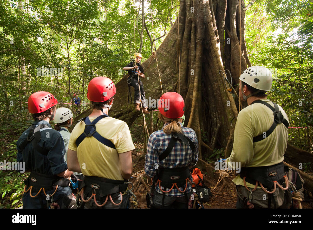 Indonesia Sulawesi Operation Wallacea Lambusango forest reserve canopy access student instruction & Indonesia Sulawesi Operation Wallacea Lambusango forest reserve ...
