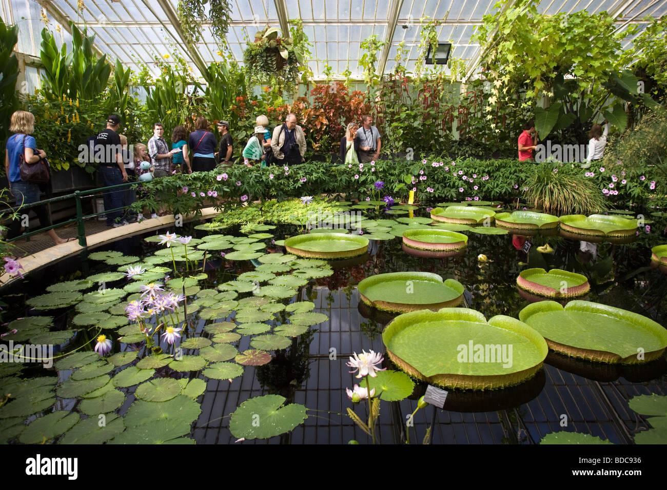 Stock Photo   Waterlily House At Kew Gardens London