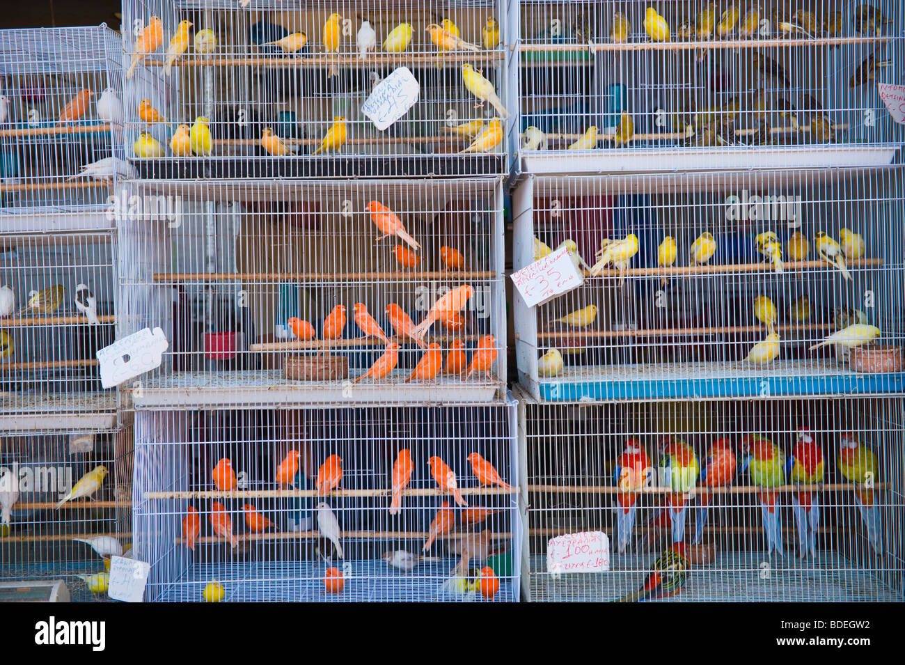 caged birds for sale at annual festival market at st gerasimos