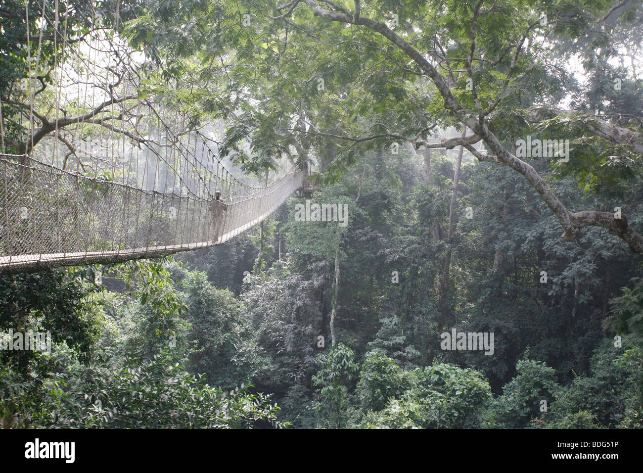 Tourists on tree top canopy walk way high at the top of the forest. Tour of Kakum National Park. Near Cape Coast. Ghana Africa & Tourists on tree top canopy walk way high at the top of the forest ...