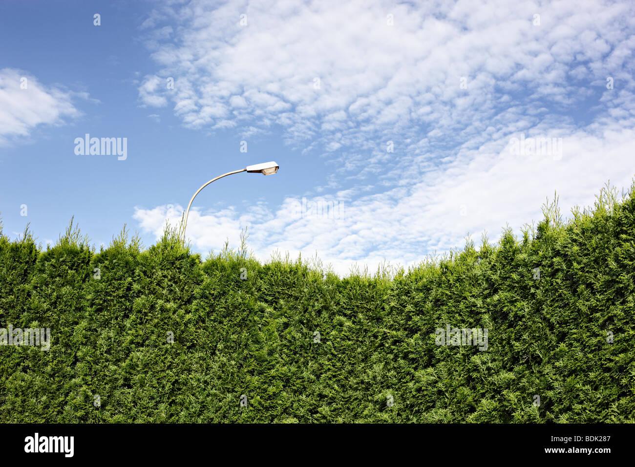 Gartenhecke