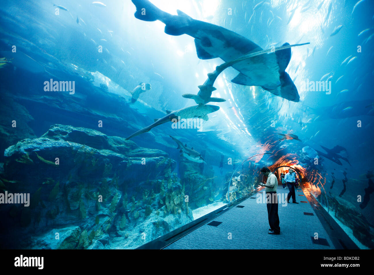 Dubai Aquarium and underwater Zoo, part of Dubai Mall in Downtown Stock Photo, Royalty Free