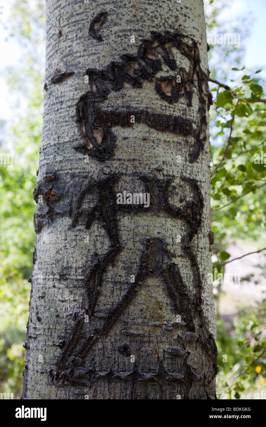Aspen tree carving from basque sheepherders s steens