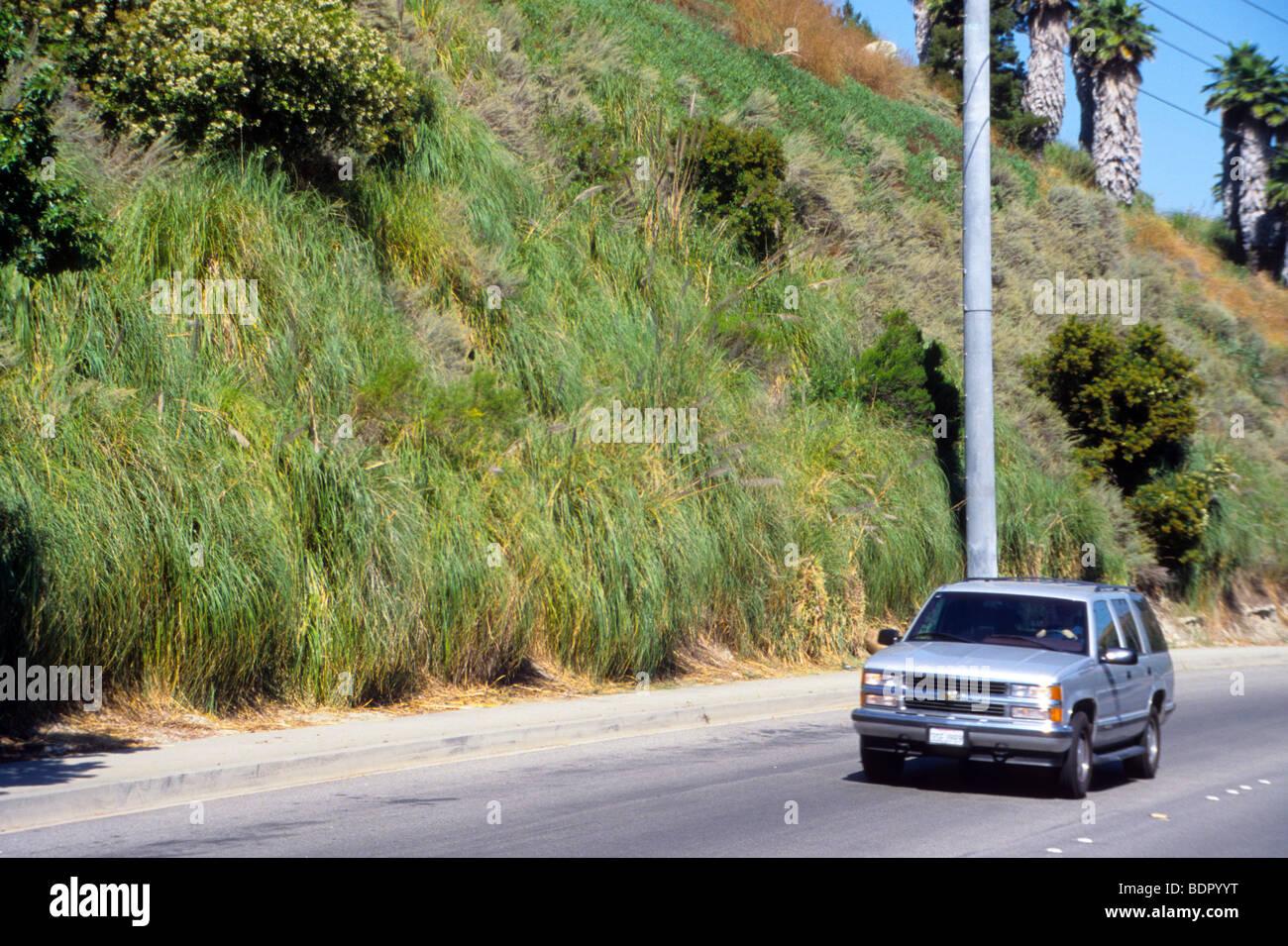 Plant green bush drought resistant low maintenance pretty for Pretty low maintenance plants