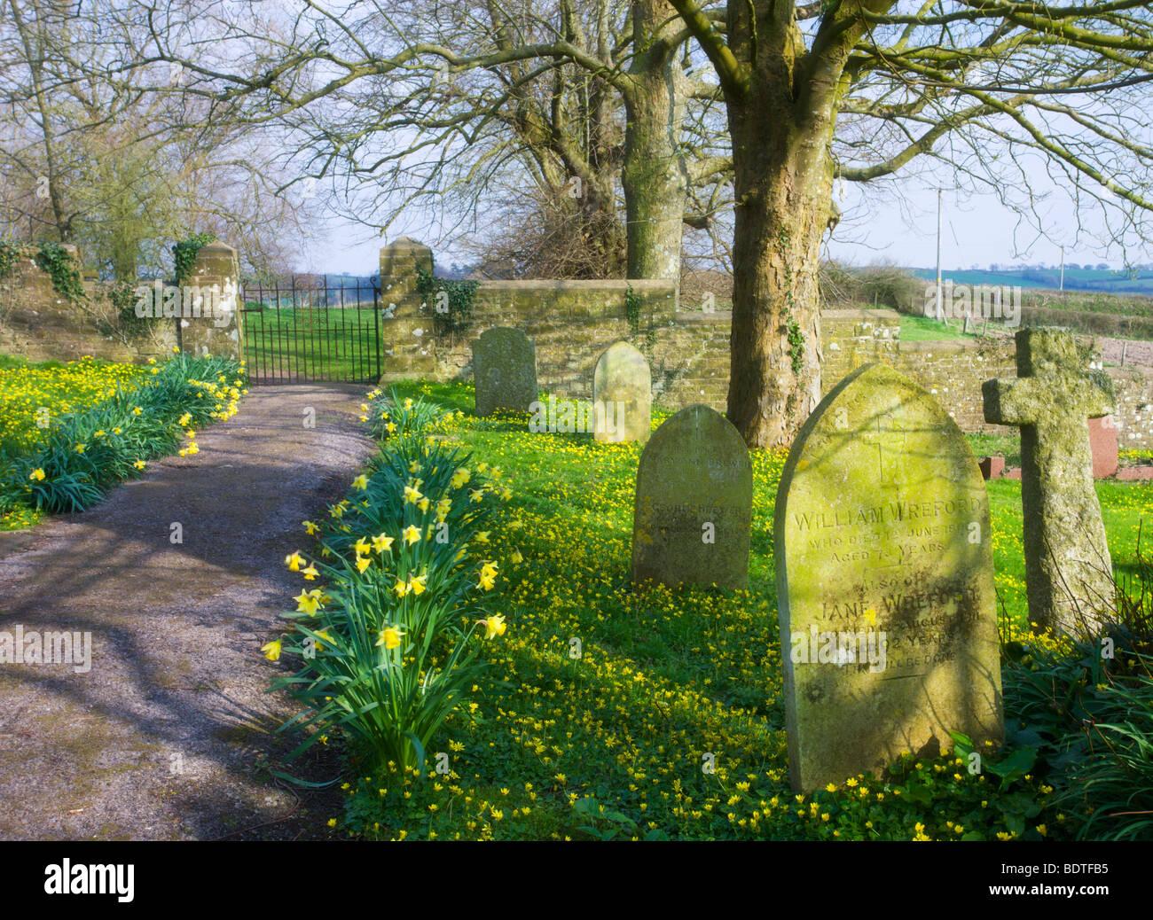 Spring Flowers Growing In Morchard Bishop Church Graveyard