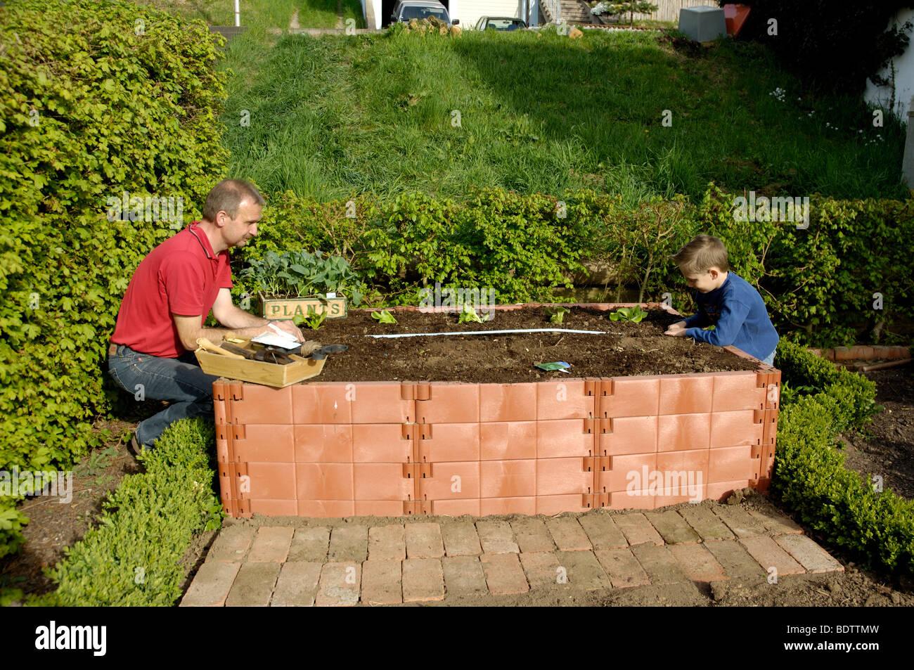 mann und junge bepflanzen hochbeet stockfoto lizenzfreies bild 25747145 alamy. Black Bedroom Furniture Sets. Home Design Ideas