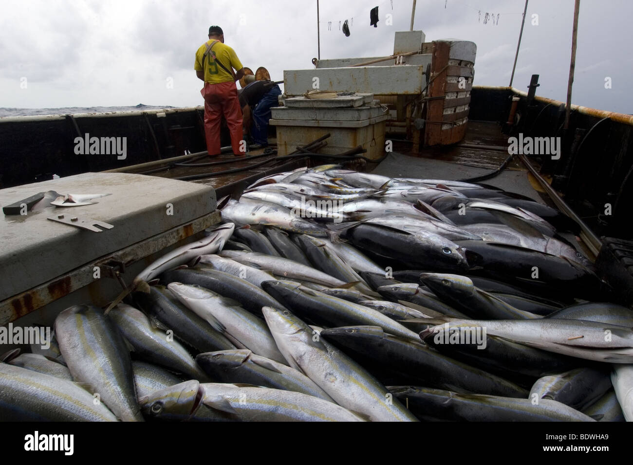 offshore commercial longline tuna fishing brazil