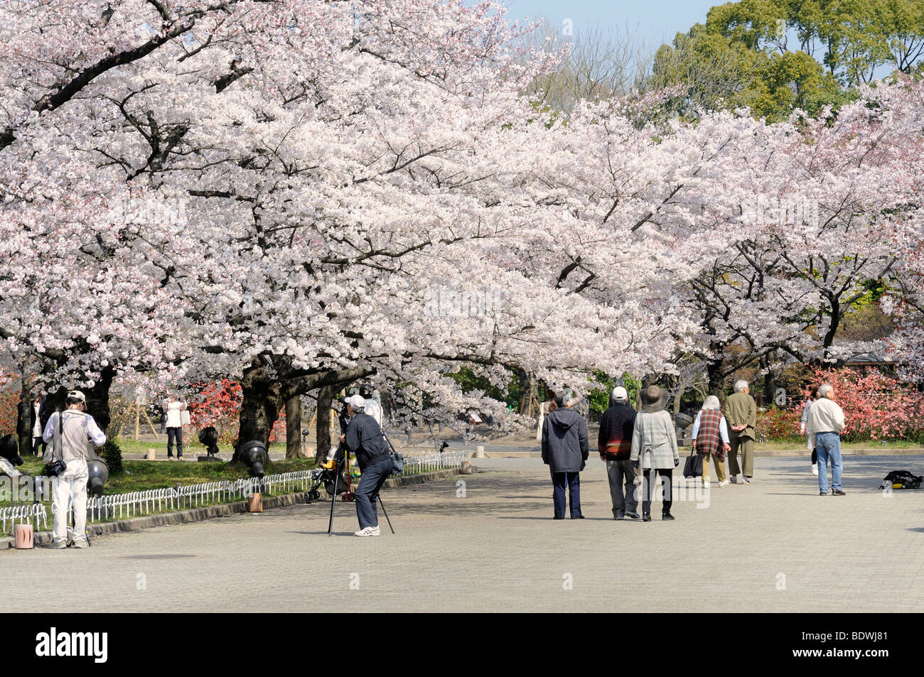 Cherry Blossoms Asian Dating Already A Member Toggler