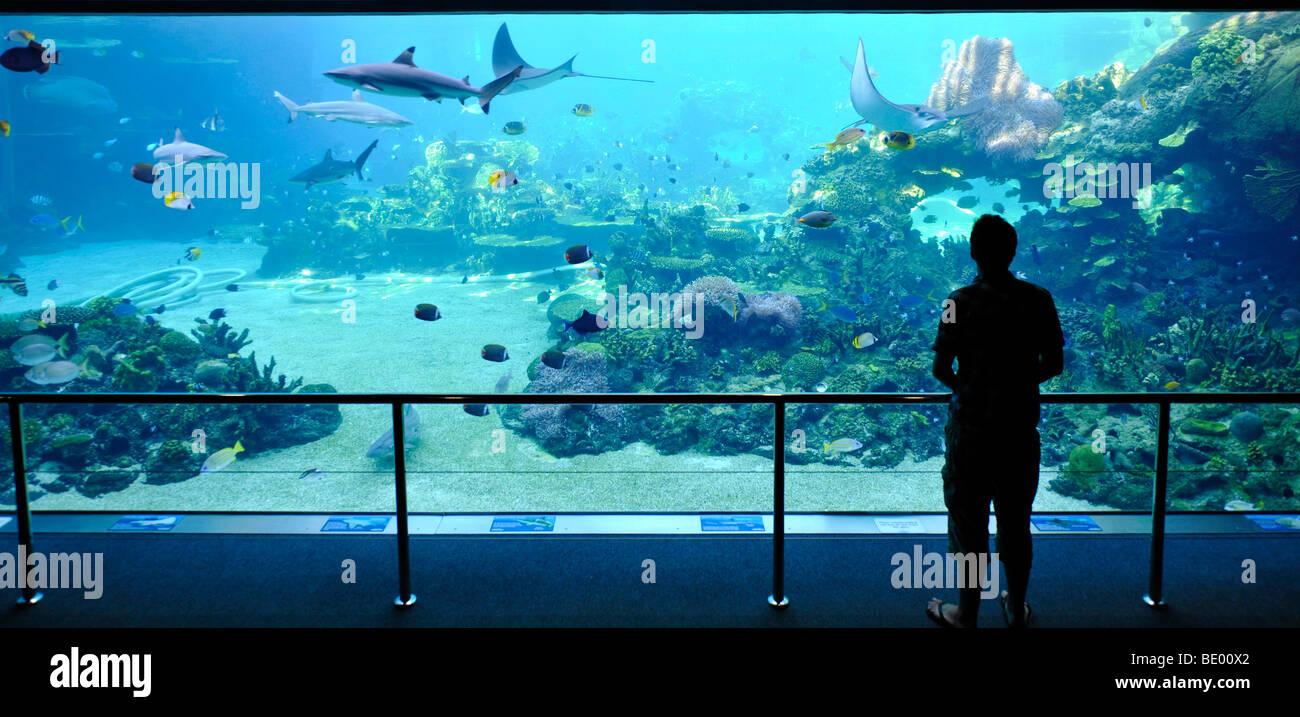 Large Display Aquarium Sharks Spectators Sea World