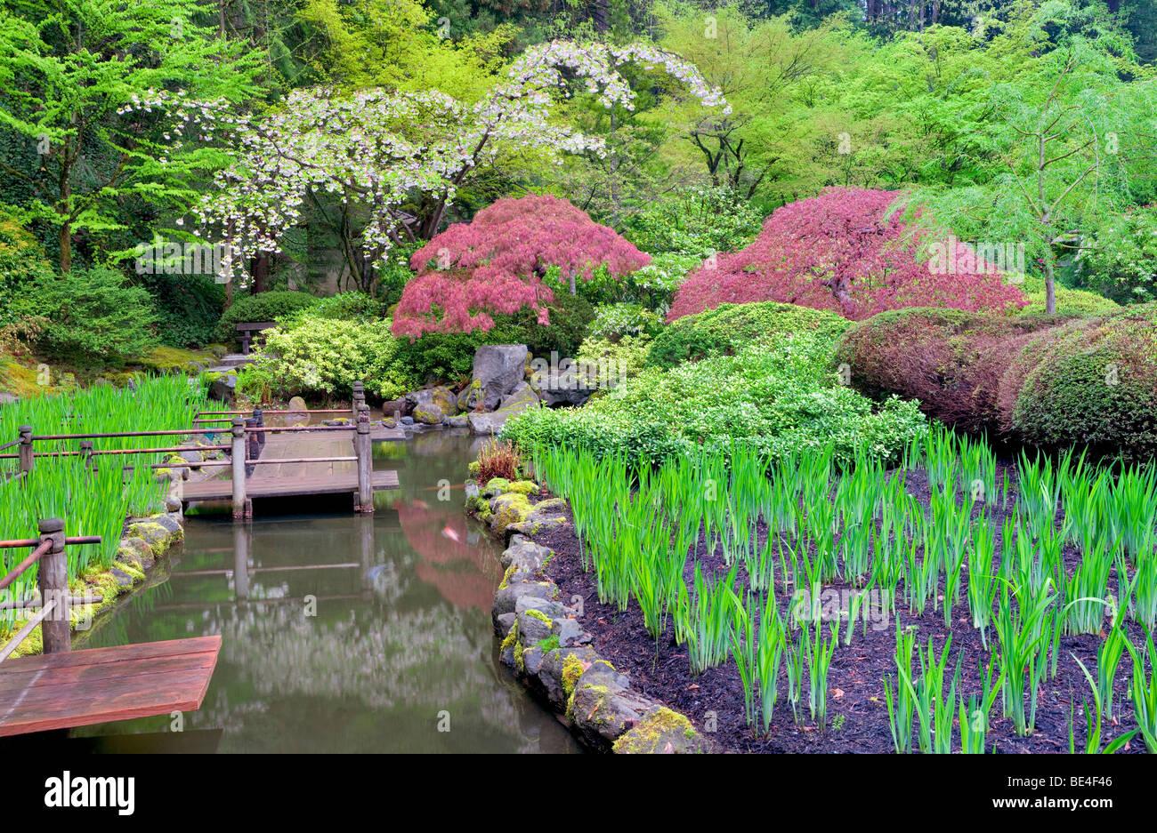 koi pond and cherry blossoms portland japanese gardens oregon