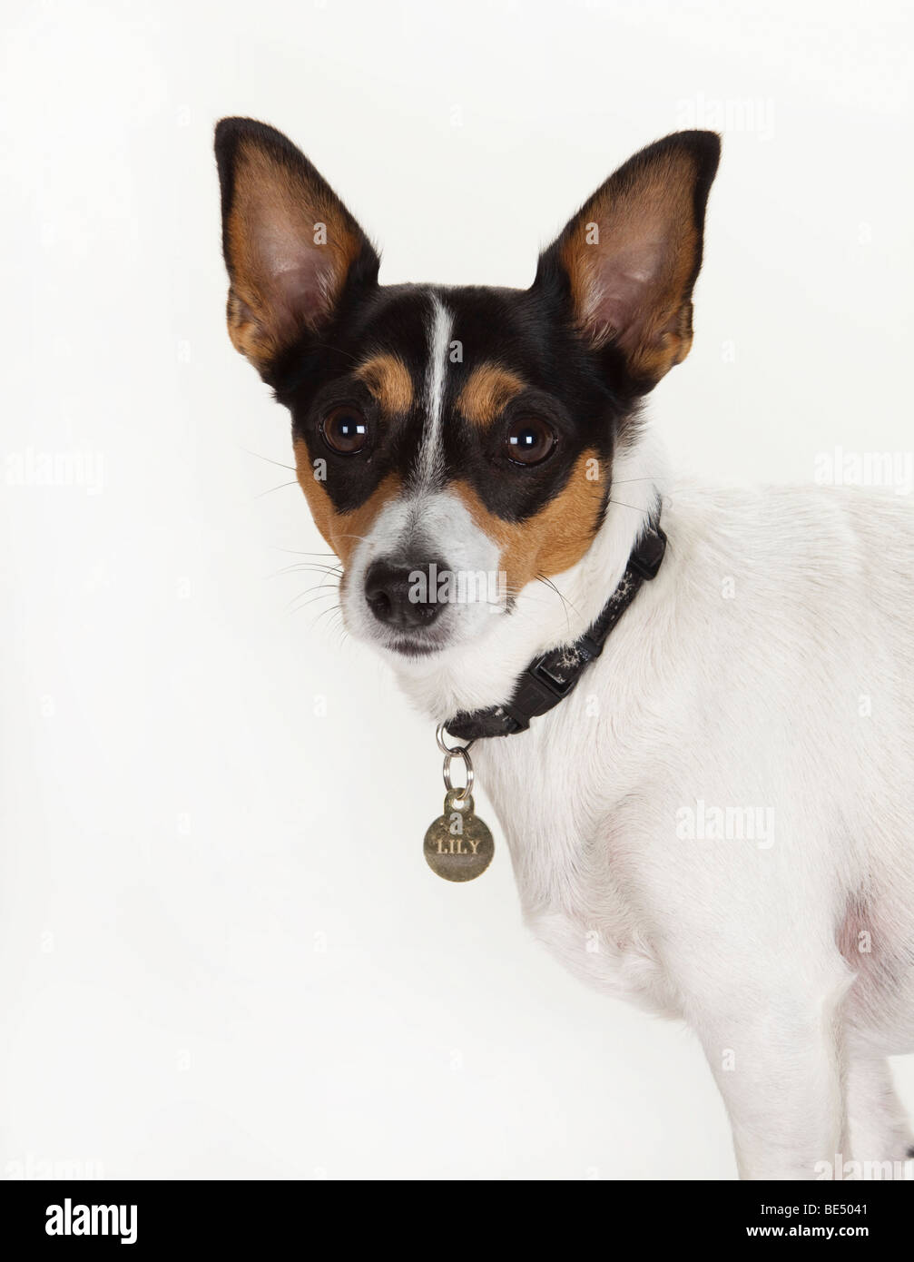 Name For A Female Dog With Pointy Ears
