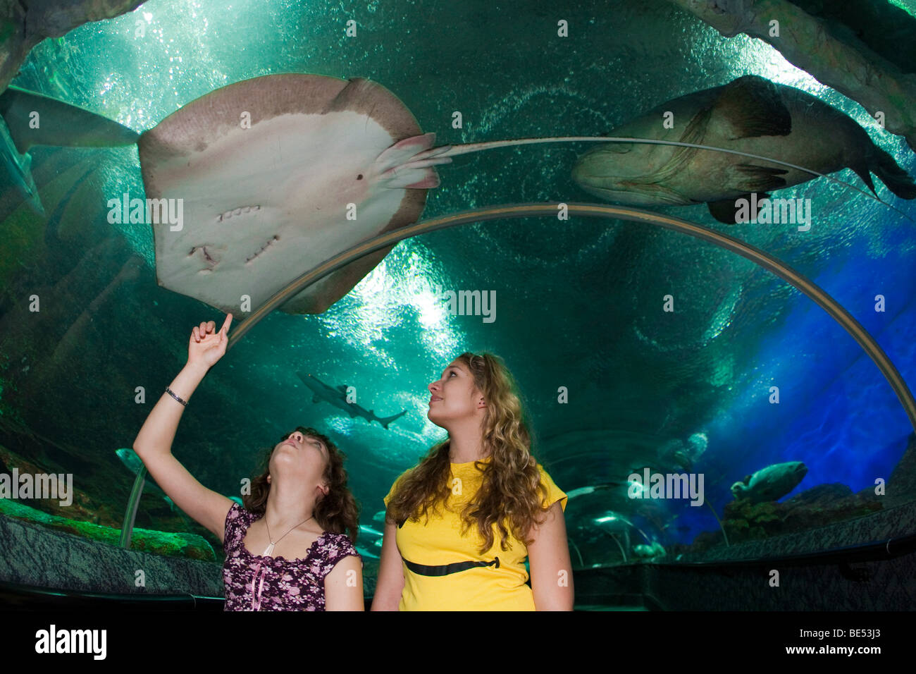 Fish aquarium in sentosa - Stock Photo Young People Watching Fish In An Aquarium Sentosa Amusement Park Singapore Southeast Asia