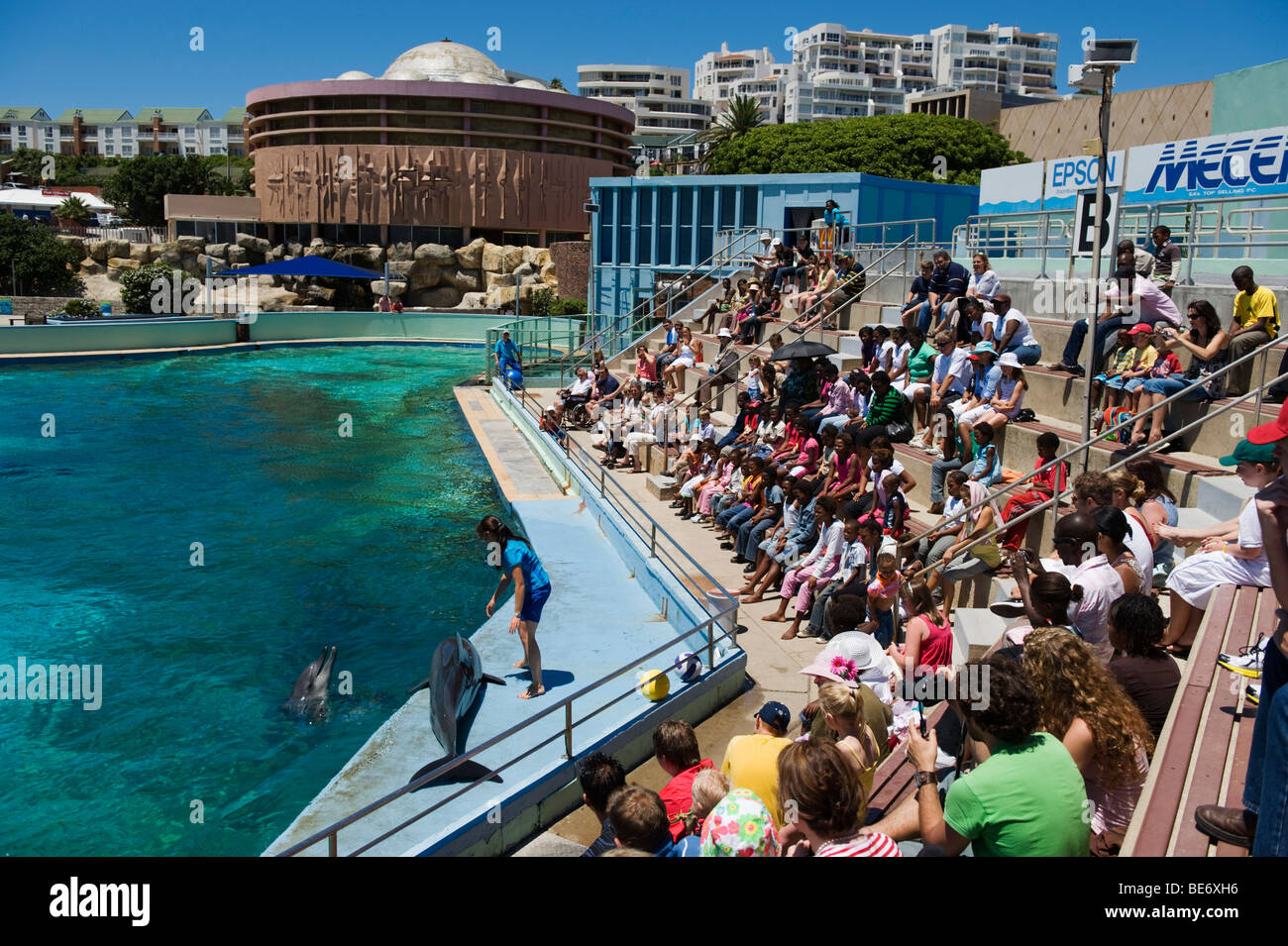 Dolphin show oceanarium bayworld port elizabeth south - What to do in port elizabeth south africa ...