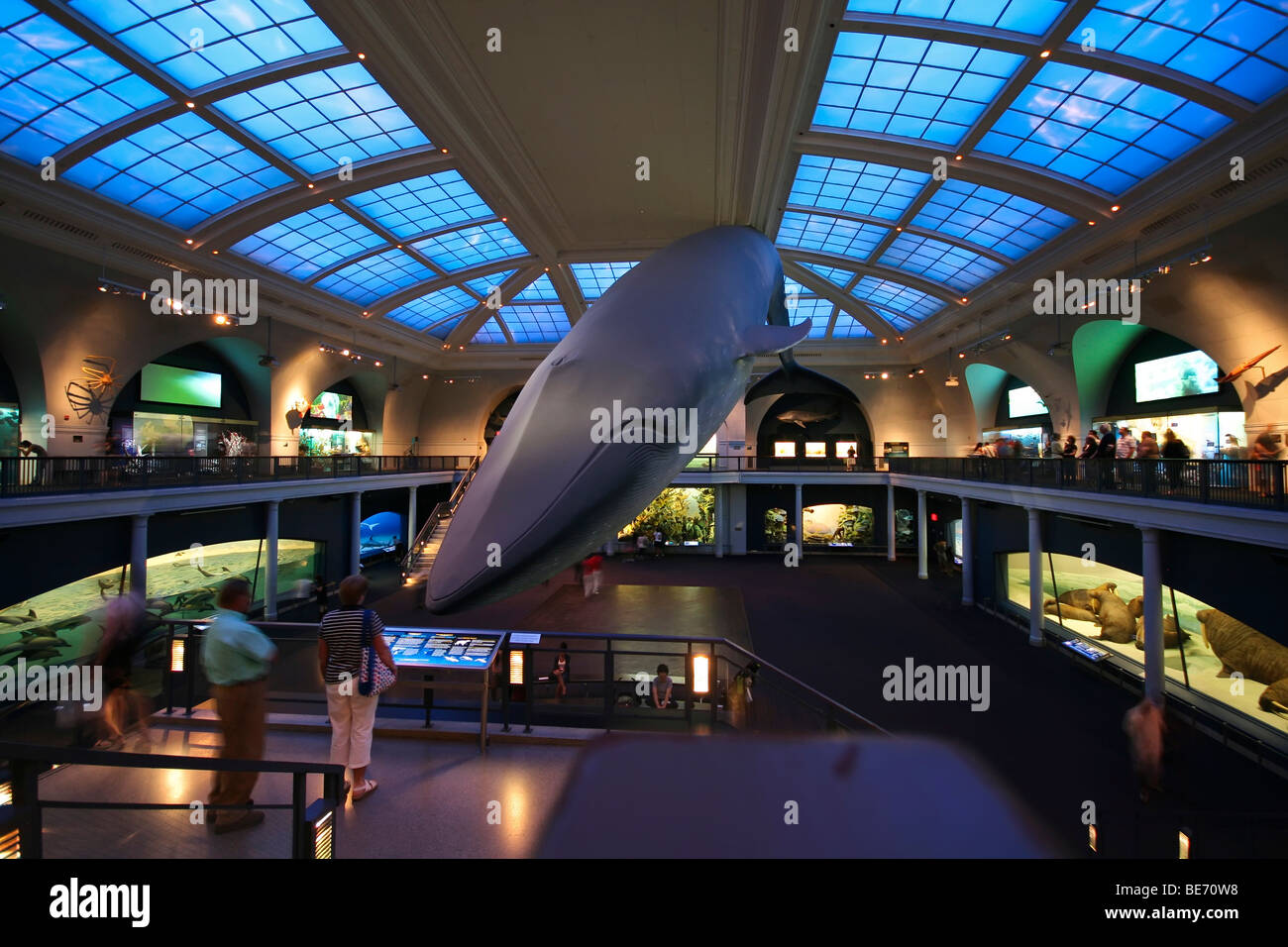 Museum Of Natural History Manhattan New York USA North America - Historical museums in usa
