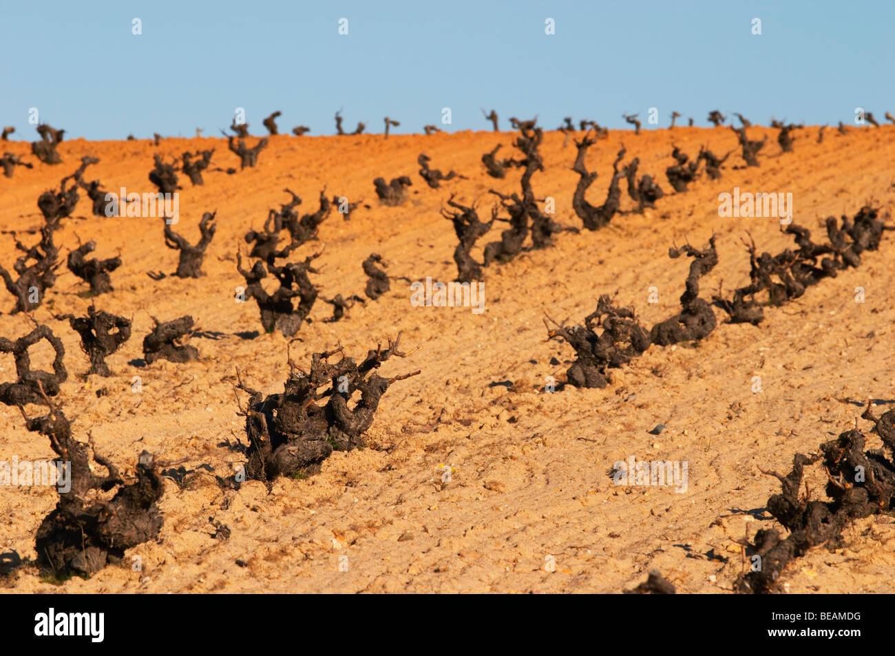 tempranillo old vine sandy soil Bodegas Vinas del Cenit, DO Tierra ...