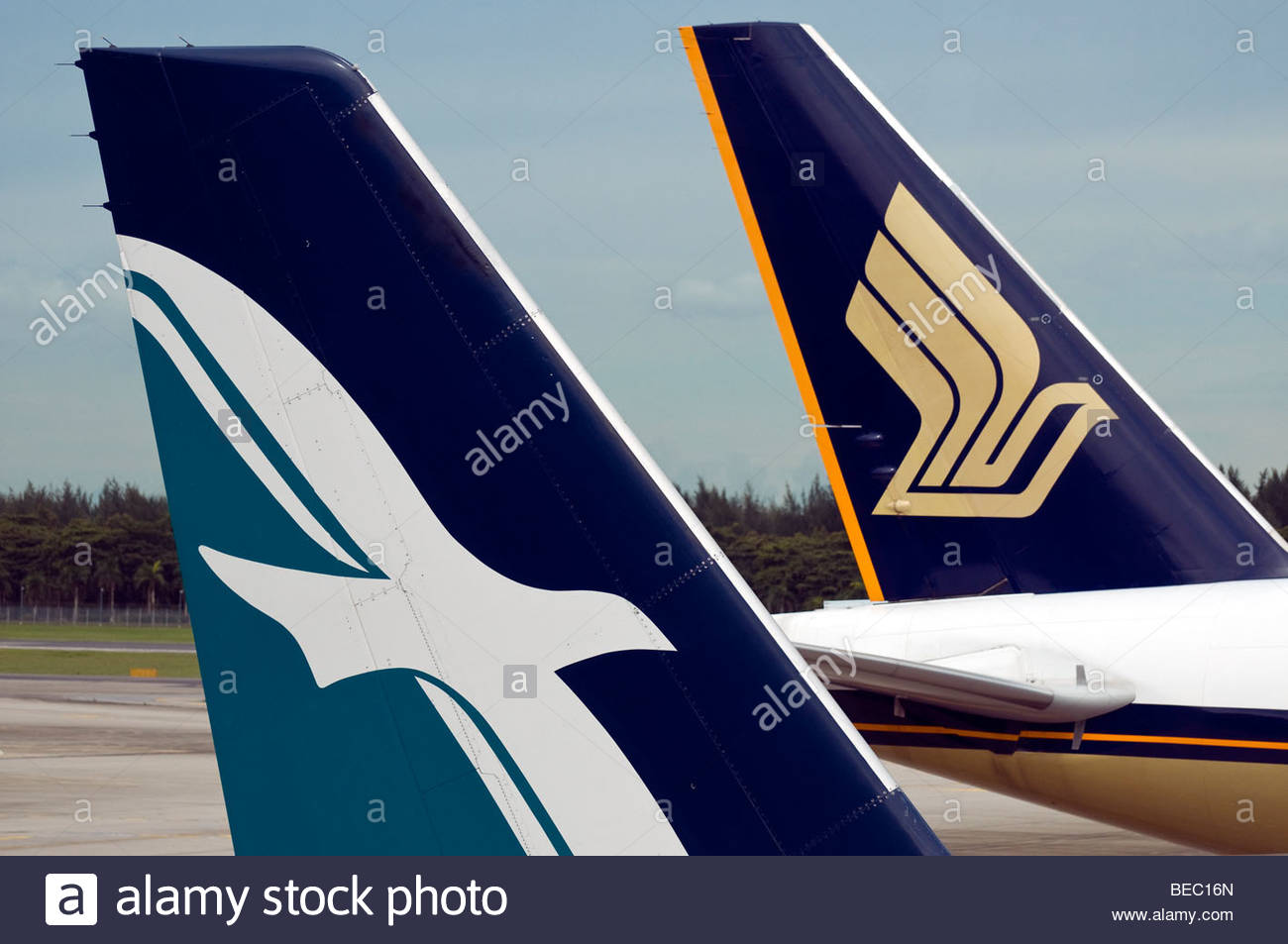 different bird logos on the tails of silk air and