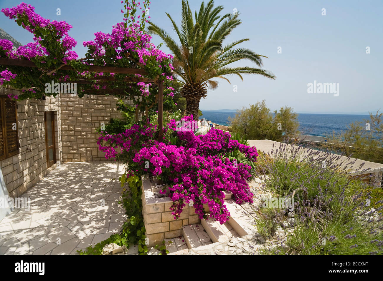 holiday flat with bougainvillea on the coast zavala hvar island stock photo royalty free. Black Bedroom Furniture Sets. Home Design Ideas