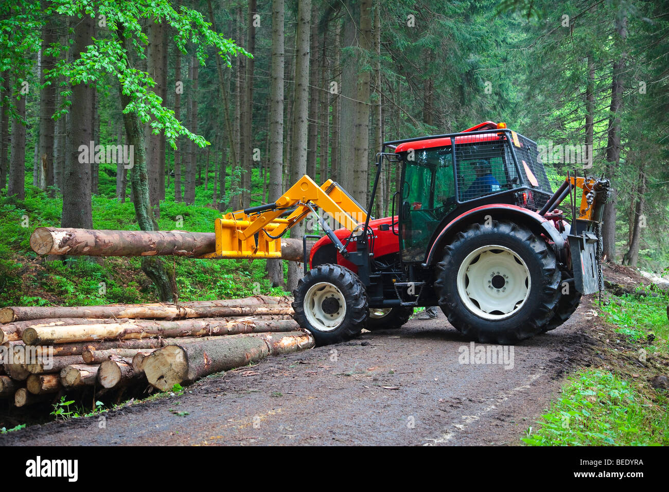 Tractor Man On Cutting Trees : Tractor lifting a cut tree on pile alongside road in