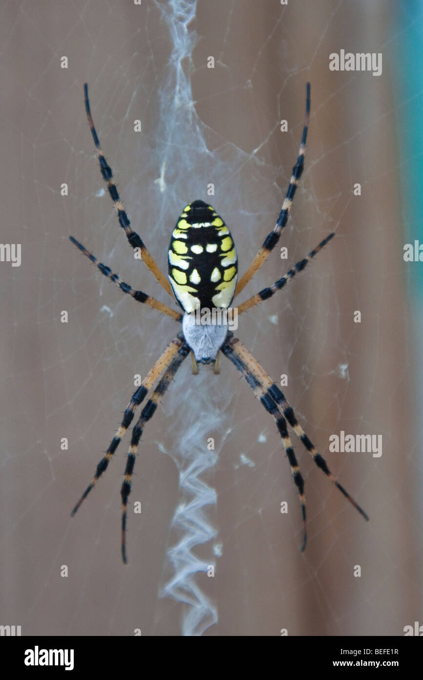 Important Features of Spider Biology