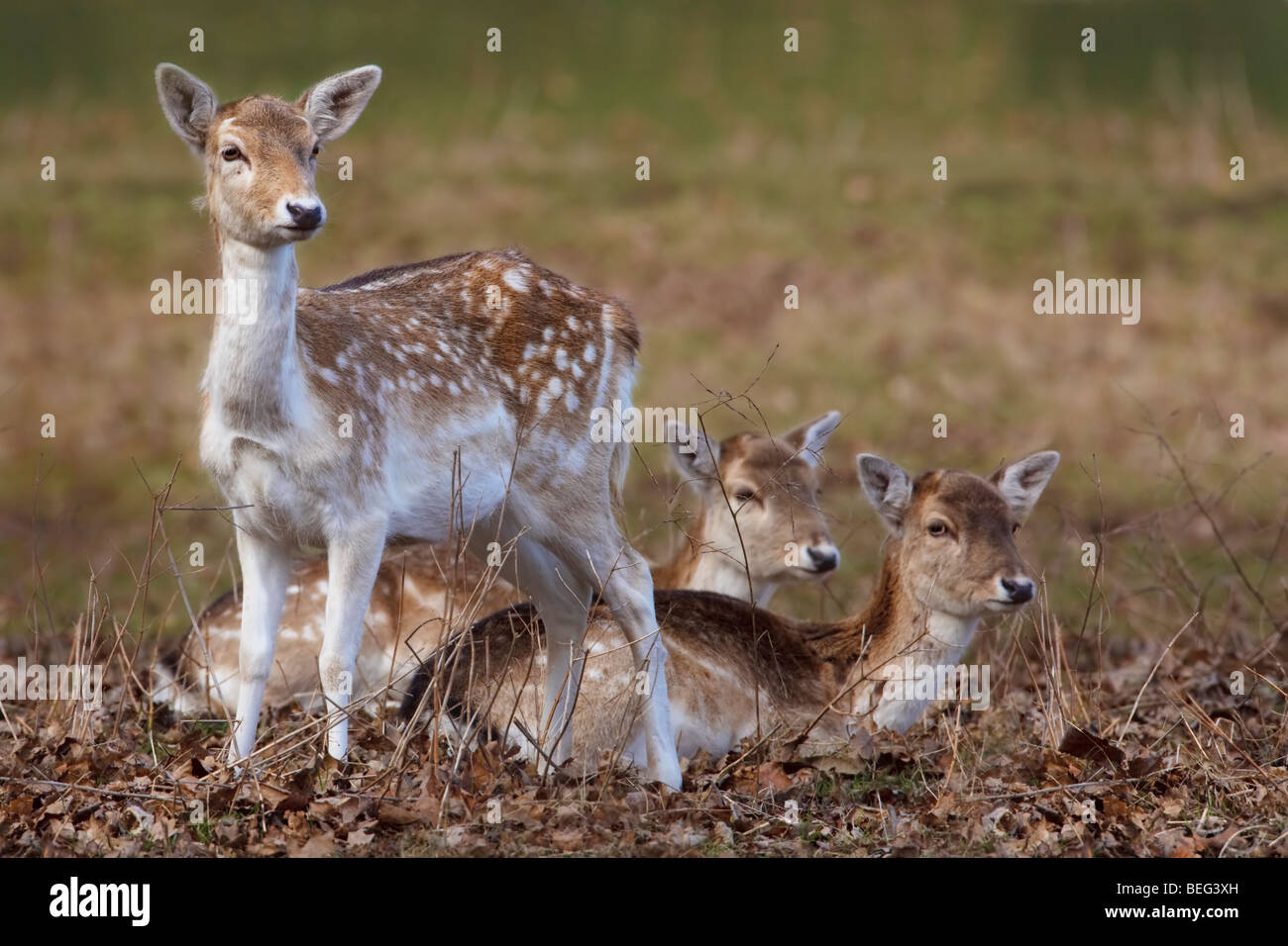 three major types of deer Anatomy and physiology of animals/body organisation from wikibooks, open books for an open world types of cells are not just scattered around randomly but similar cells that perform the same function are arranged in groups.