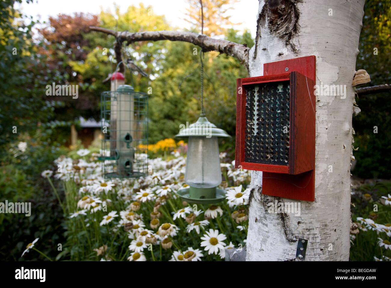 backyard flower garden with bird feeders and homemade beehive