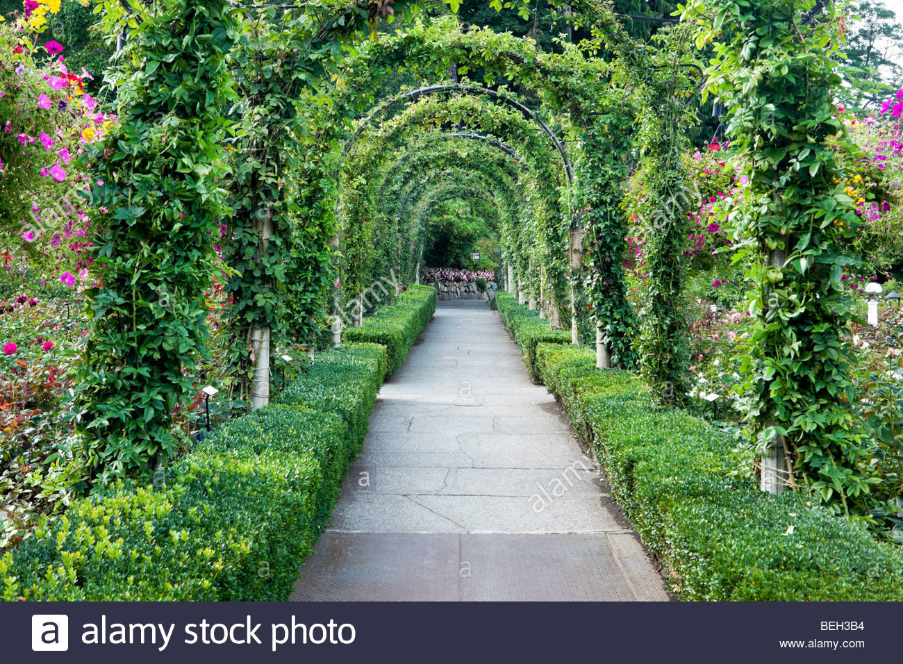 Rose Garden Pathway At The Butchart Gardens, Brentwood Bay, B.C