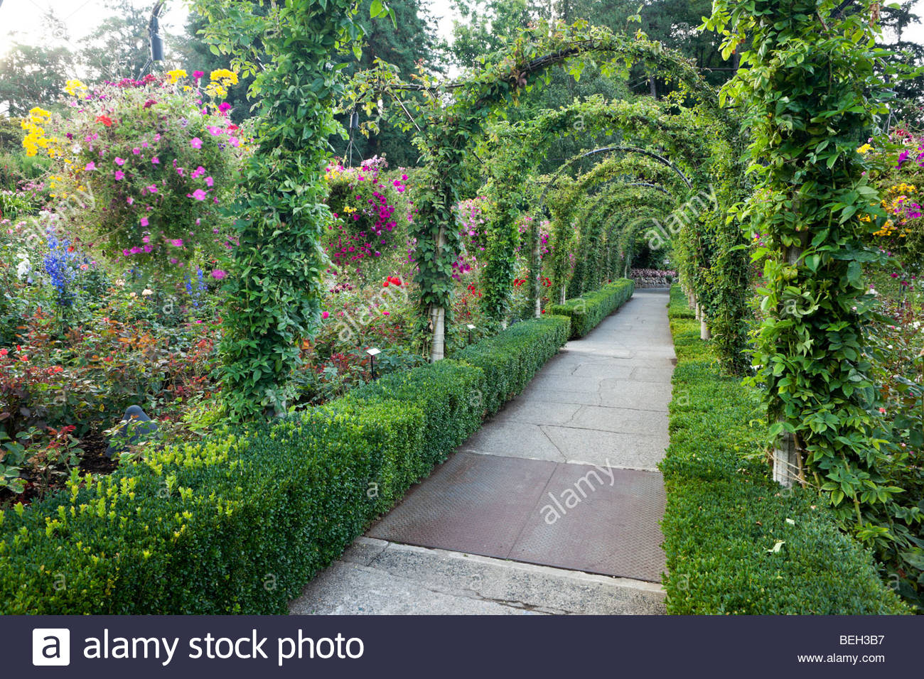 Hanging Flower Baskets Along Rose Garden Pathway At The Butchart Gardens,  Brentwood Bay, B.C