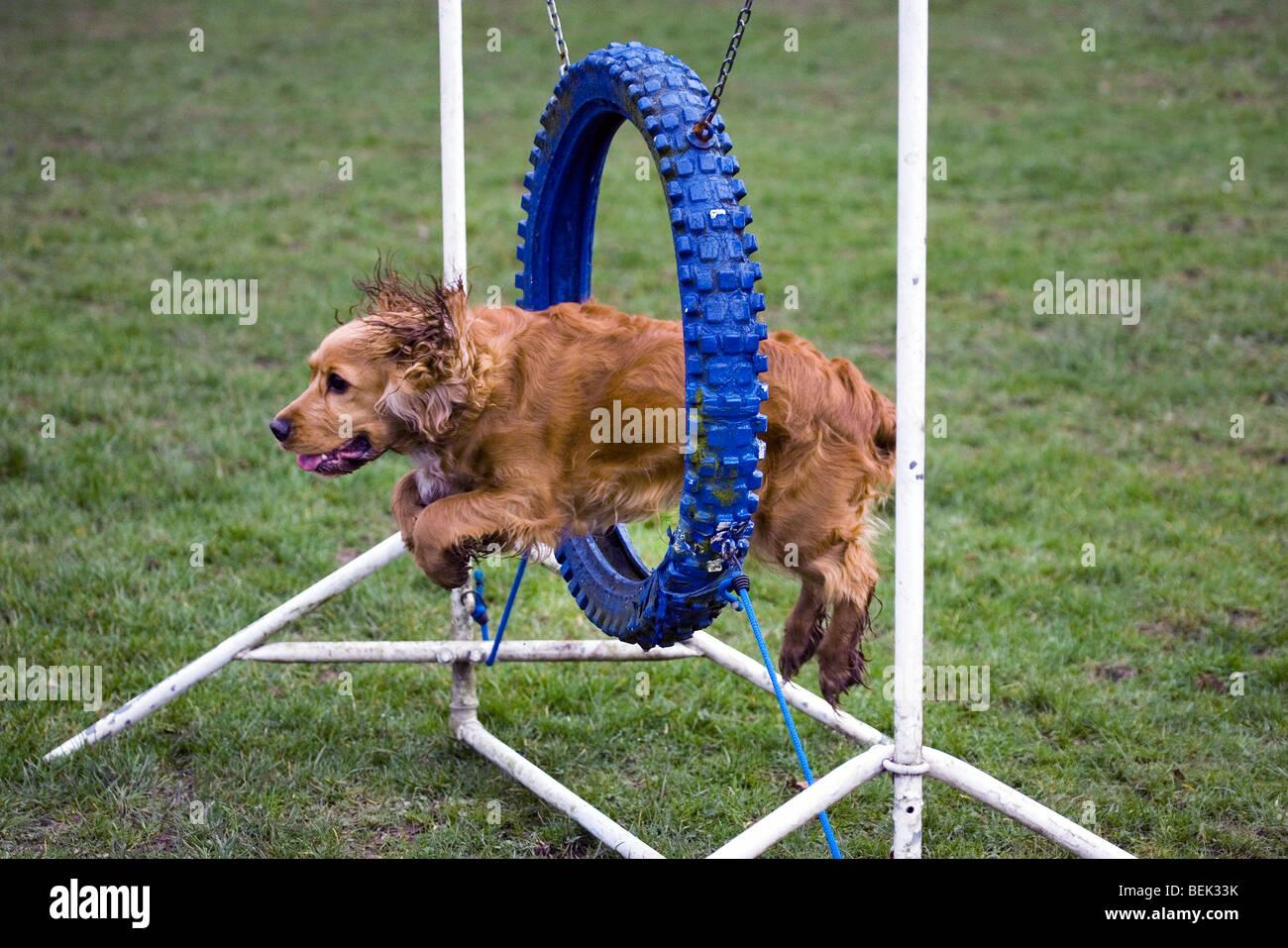 dog jumping stock photos u0026 dog jumping stock images alamy