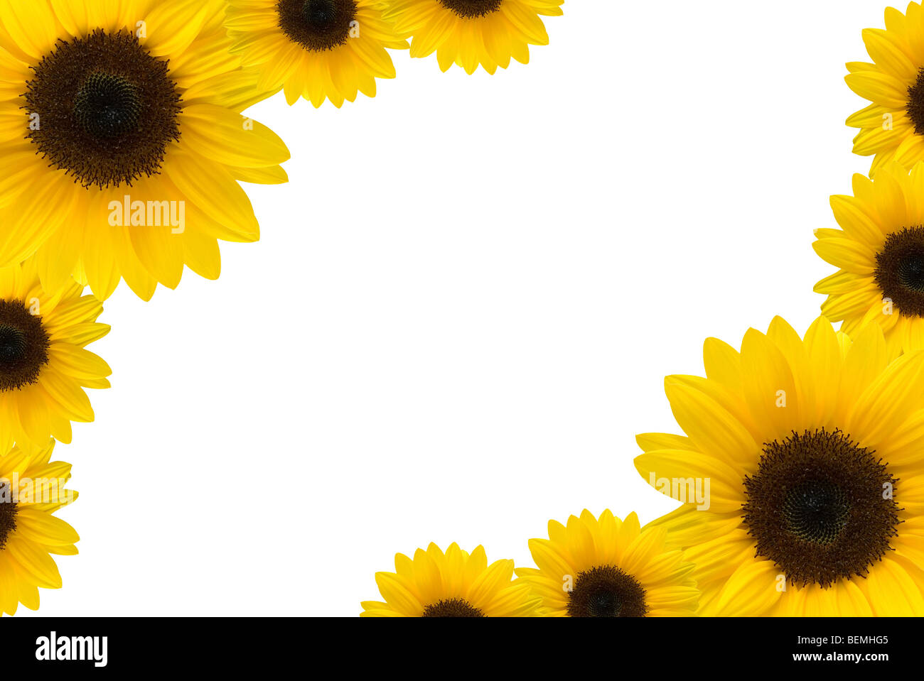 sunflower frame stock photo royalty free image 26268373 alamy sunflower frame jeuxipadfo gallery - Sunflower Picture Frames